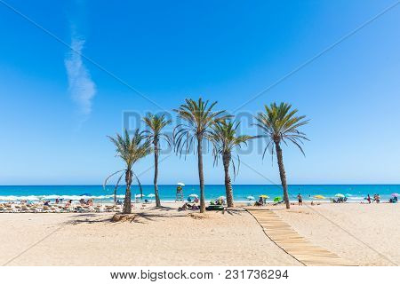 Seaside In Alicante, With Palm Trees On The Beach