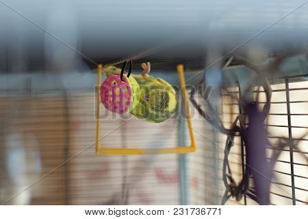 A Young Budgeigar Parrot Walks Upside Down On The Inside Of The Roof Of The Cage And Plays With A Br