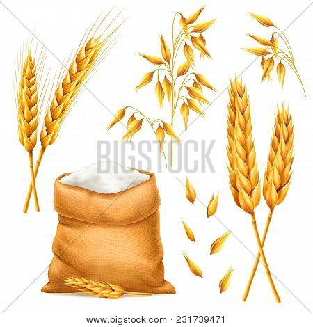 Realistic Bunch Of Wheat, Oats Or Barley With Bag Of Flour Isolated On White Background. Vector Set