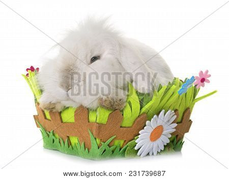 Aries Rabbit In Front Of White Background