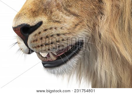 Lion Wild Feline Big Teeth, Close View. 3d Rendering