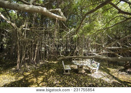 Thailand Isan Phimai Sai Ngam Banyan Tree