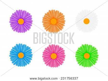 Chamomile.the Flowers Are Multicolored. Vector Illustration On White Background.