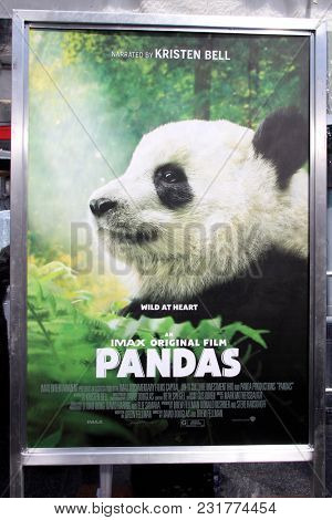 LOS ANGELES - FEB 17:  General Atmosphere, Poester, Pandas at the World Premiere Of