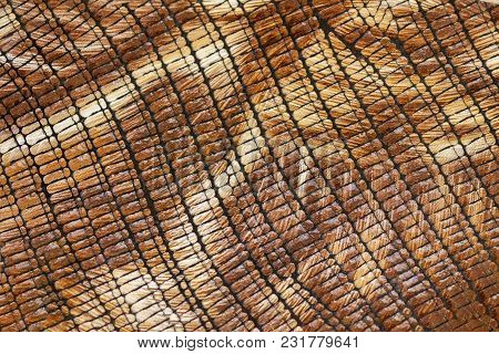 Bright Texture Of Genuine Leather Close-up, Embossed Under Skin Reptile, Beige Brown Shades, Exotic