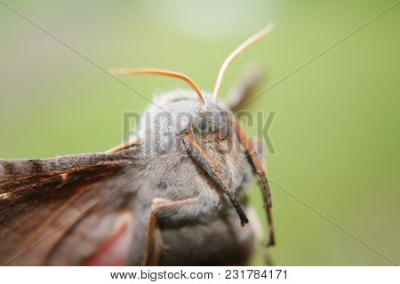 Beautiful Flight Of A Butterfly. Big Bug On A Green Background.