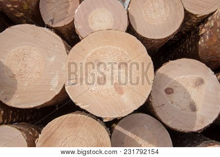Timber In Piles Beside A Road In A Forest In Filipstad Sweden