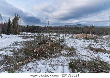 Cutting Area In A Swedish Forest With Piles Of Lumber