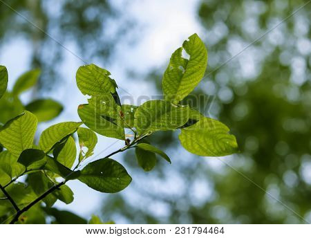 Greeen Tree Branch In A Spring Forest