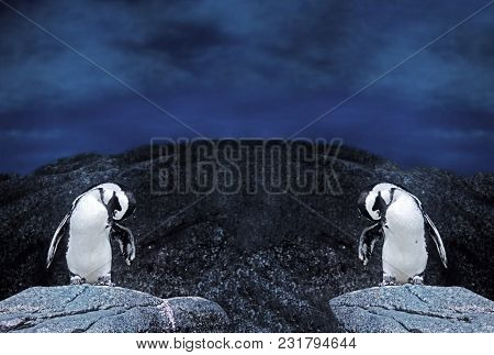 Closeup Dual Magellanic Penguins Stand On A Rock Isolated On Nature Background