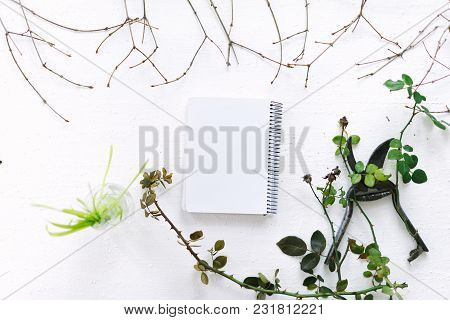 Garden Scissors On A White Background Branches Of Plants.