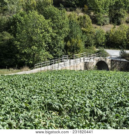 The Stone Bridge And Plantation In Spain.