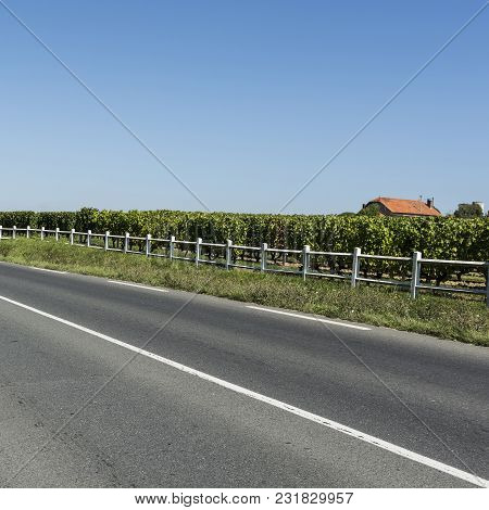 Industrial Growth Of Grapes In France. Asphalt Road Near The French Wine Farm Surrounded With Beauti