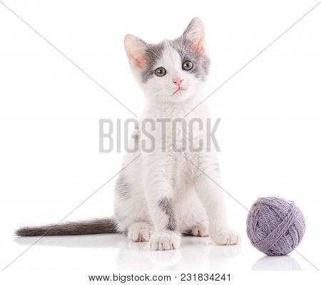 The Cat Is Isolated On White. Kitten Is Played With A Ball Of Thread. Young Player In The Ball. Nba