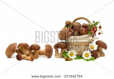 Wild Mushrooms, Strawberries And Chamomile On A White Background. Horizontal Photo.