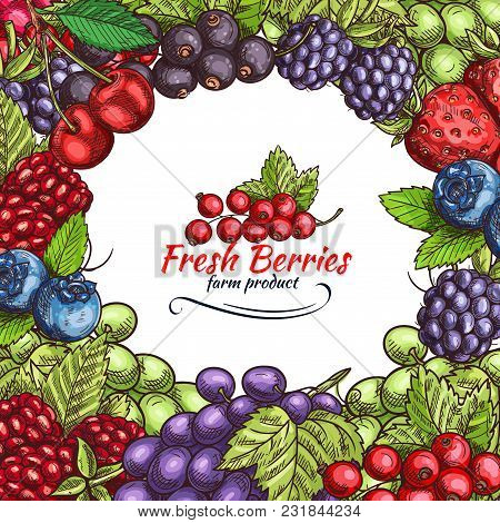 Berries And Berry Fruits Sketch Poster Of Fresh Organic Farm Strawberry, Raspberry And Grape. Vector