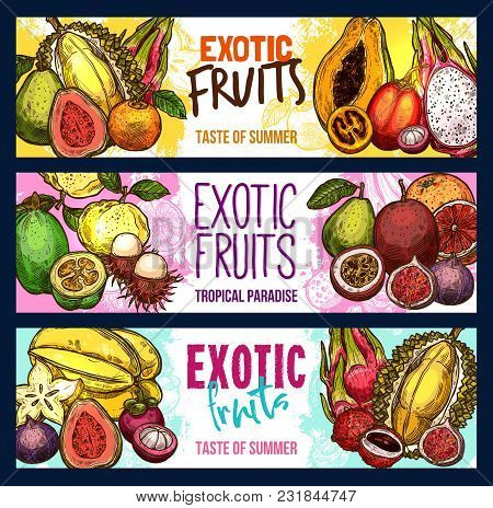 Exotic Fruits Sketch Banners For Fruit Shop Or Farmer Market. Vector Sketch Tropical Guava, Lychee O