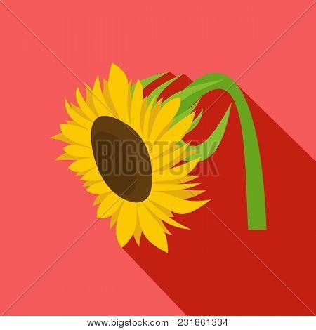 Beautiful Sunflower Icon. Flat Illustration Of Beautiful Sunflower Vector Icon For Web