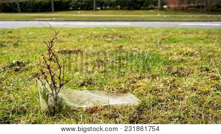Day View Closeup Of Young Tree Sprout Polluted And Covered With Peace Of Plastic Waste Next To Road