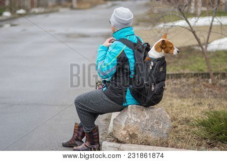 Mature Woman Having Short Rest Sitting On A Stone While Walking With Her Lazy Basenji Dog Inside Bac