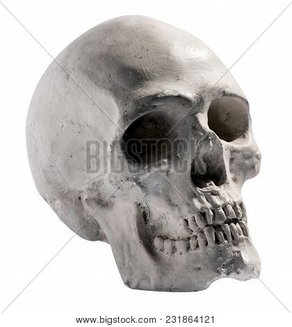 Toy Model Of A Human Skull