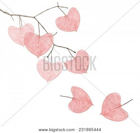 branch with red heart shape leaves isolated on white background