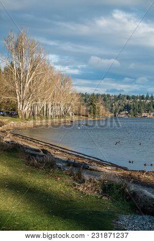 A Veiw Of The Shoreline At Seward Park In Seattle, Washington.