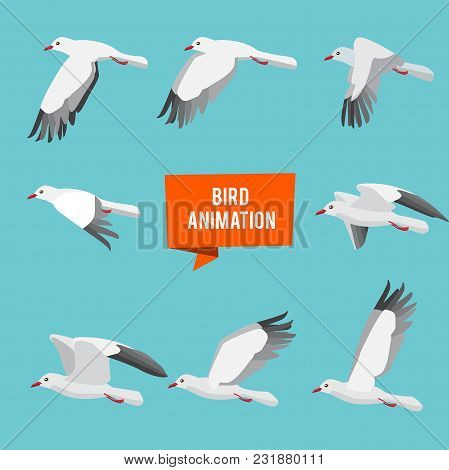 Key Frames Of Animation Flying Bird. Animation Bird Fly, Animal Wildlife Fly Loop Beak, Vector Illus