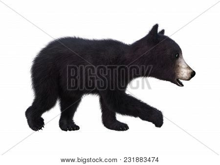 3d Rendering Of A Black Bear Cub Isolated On White Background
