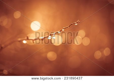 Raindrops On A Tree Branch, Golden Summer Nature Abstract Background Concept, Soft Focus, Bokeh, War