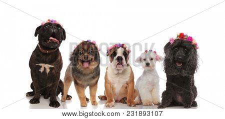 Lovely group of mixed dogs wearing flowers crowns on a whote background, waiting for spring to come