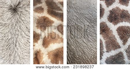 Set of vertical nature banners with texture of animal skin - asian ox, elephant, giraffe