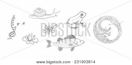 Biological Banner. Flower, Dna, Perch, Amoeba, Human Embrio. Drawing Black And White Outline Vector
