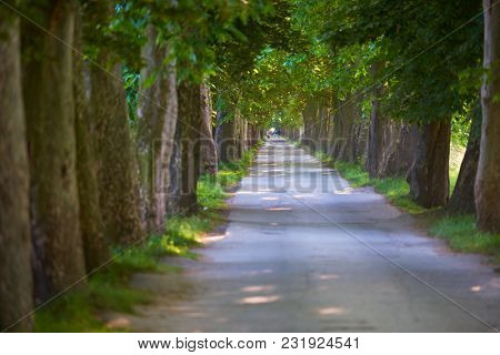 country road trought tree  alley in the park fresh  morning at spring nature landscape
