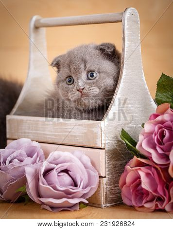Scottish Fold Cat In Decorative Wooden Box Near Bouquet Of Flowers.cat At Home. Scottish Fold Cat Po
