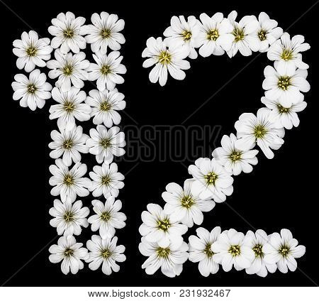 Arabic Numeral 12, Twelve, One, Two, From White Flowers Of Cerastium Tomentosum, Isolated On Black B