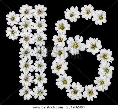Arabic Numeral 16, Sixteen, One, Six, From White Flowers Of Cerastium Tomentosum, Isolated On Black