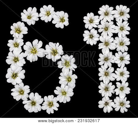Arabic Numeral 61, Sixty One, Sixty, Six, One, From White Flowers Of Cerastium Tomentosum, Isolated