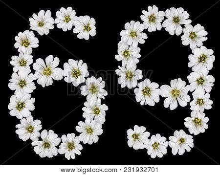 Arabic Numeral 69, Sixty Nine, Sixty, Six, Nine, From White Flowers Of Cerastium Tomentosum, Isolate