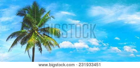 Palm Tree Close Up View At The Picturesque Sky Background. Tropical Beach At The Exotic Island. Adve
