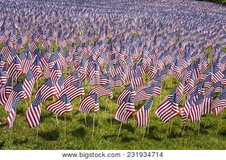 Large Group Of Small American Flags On A Park Lawn.