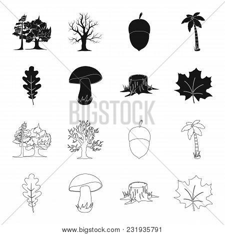 Oak Leaf, Mushroom, Stump, Maple Leaf.forest Set Collection Icons In Black, Outline Style Vector Sym