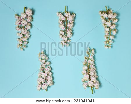 Spring Simple Aqua With White Blooming Chestnut Flowers, Lying On The Blue Background, Close-up Top