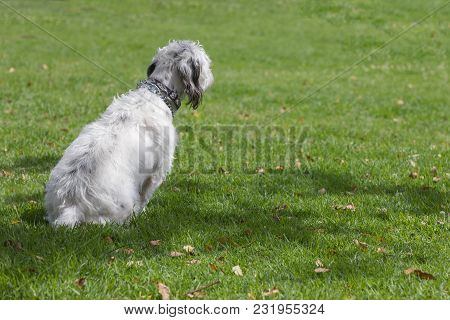 White Mutt Dog Sitting In The Park Watching