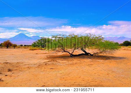 Landscape Of Atacama Desert At Hot Day Time. Chile.