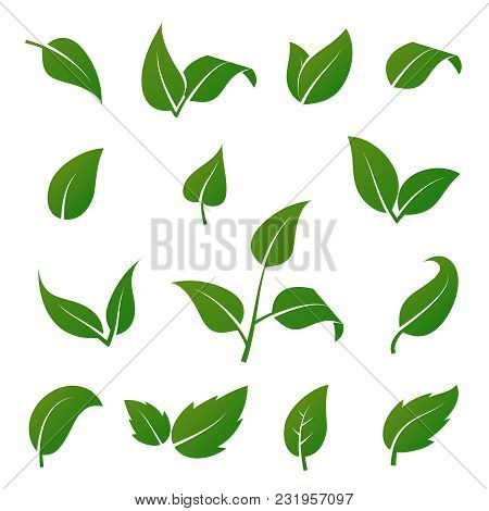 Green Tree And Plant Leaves Vector Icons Isolated On White Background. Eco Symbols Set. Plant Green