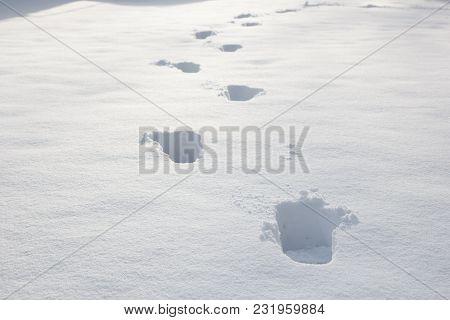 A Footprints In A Fresh Powder Snow