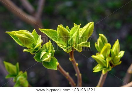 Photo Of A Young Green Tree Branch On Dark Background