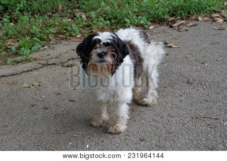 An Ungroomed Dog Standing On A Sidewalk