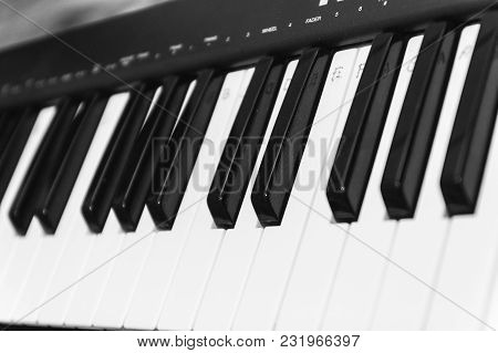 Black And White Piano Keys, Side View. The Concept Of Music.